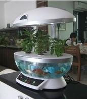 An Upgraded Intro Aquaculture Aquaponics Tank