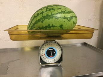Weight of watermelon on tray