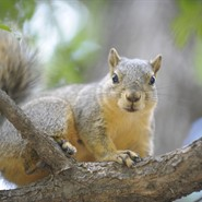 Critter Roundup: Squirrel School