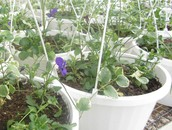 Hanging Baskets for Flower Sale