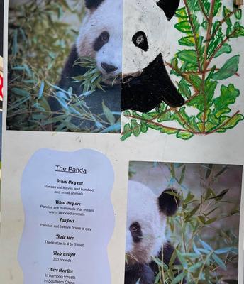 Roohi Patel - The Panda