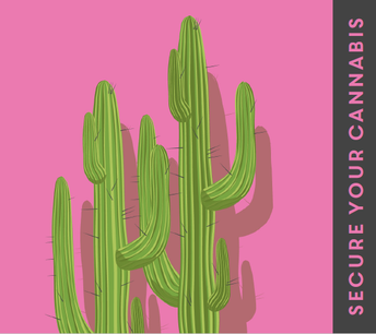 cactus image secure cannabis graphic