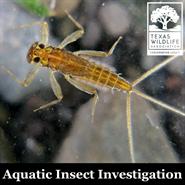 Aquatic Insect Investigation