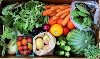 Free Food Market Back Again
