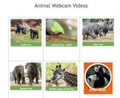 Animal Web Cams
