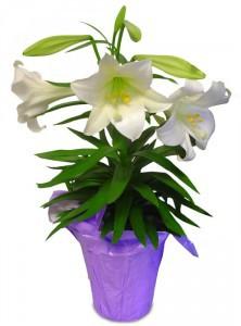 HSE Habitat for Humanity Easter Flower Sale