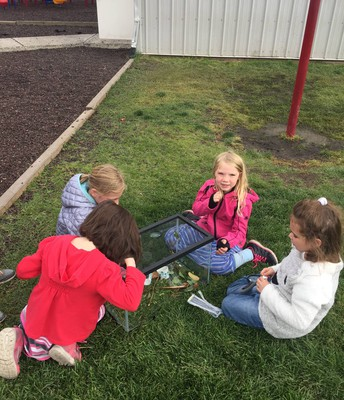 2nd Graders catching grasshoppers during recess