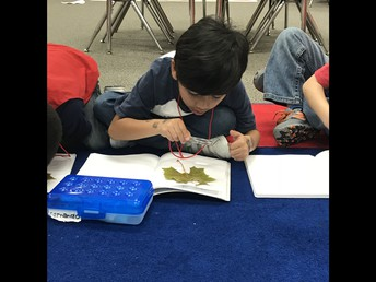 We can observe leaves with a hand lens.
