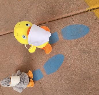 Goslings On the Footprints...