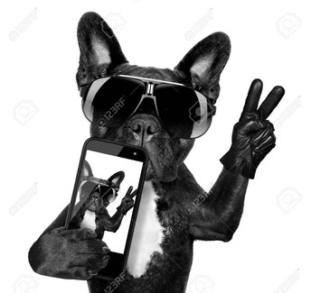 Calling all Bulldogs: Bulldog Spotlight!