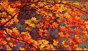 NCVPS does not observe Fall Break