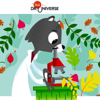 Ask Dr. Universe screenshot