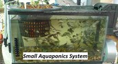 An Essential A-To-Z On Crucial Factors Of Small Aquaponics System