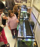 Raising fish at Walter & Gladys Hill School