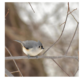 Local Bilingual Bird Walk