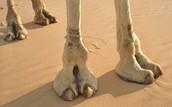 Big, Flat, Footpads