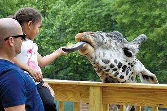 Father's Day Weekend at the Zoo - June 15 & 16
