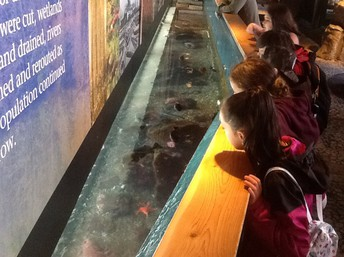 Elementary Students Attend Salmon Homecoming