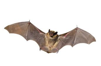 Bat Chat