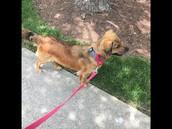 Grace Averett Got a New Pup