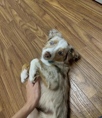 Ms. Wolfs puppy, Milo!