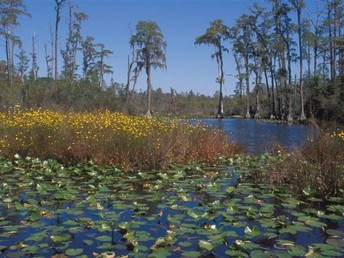 Science in the Swamp