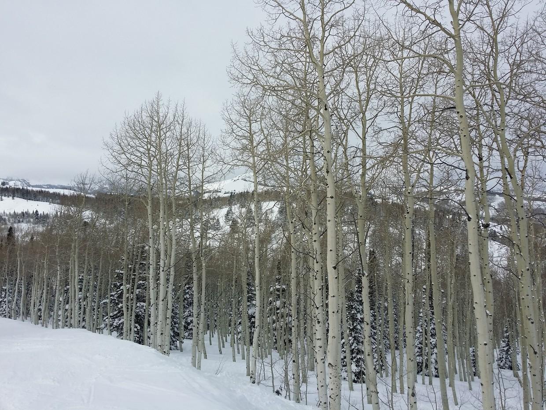 Seasons Greetings!  (link here)