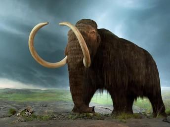 Let's look at extinct animals