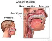 Common Cold Diagram