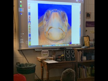 Virtual field-trip to learn about turtles from experts