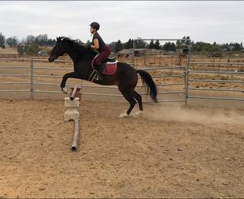 Sophia Riding Her Beloved Dominic