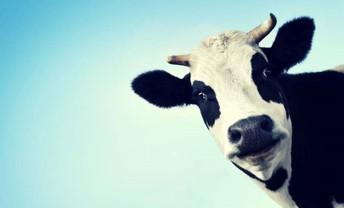 Milk Order Time ... Deadline Oct. 31st