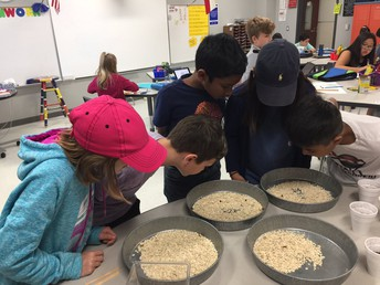 Life Cycle of Mealworms