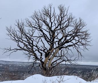 Lonely Tree by Mr Stucki