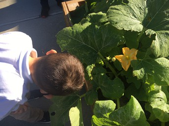 Checking on our pumpkins