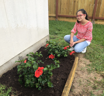 Helping the planet by planting hibiscus.