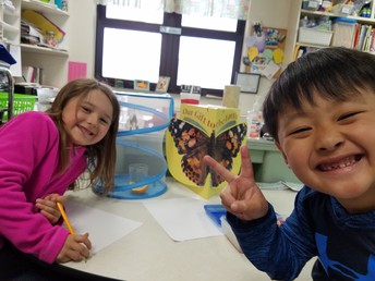 More Butterfly Learning