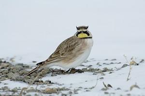 Wisconsin Nature Note: Birds