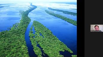 Rainforest Virtual Assembly