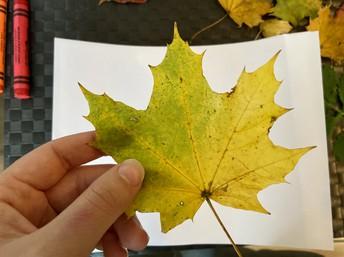 Pick one leaf to start.