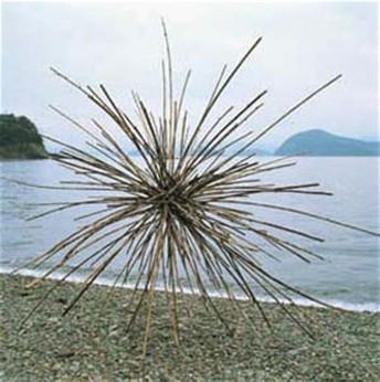 Sticks at the beach
