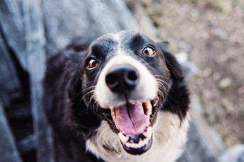 Specialized Products Help Dog Owners Cope With a Common Problem