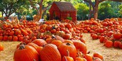 McVeigh's Pumpkin Patch Field Trip - Kindergarten