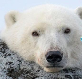 Tundra Experience