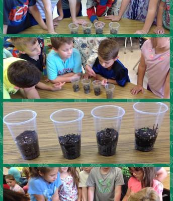 Second Grade Plant Needs Experiment