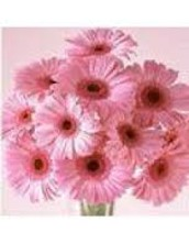 An Informative Evaluation On Reliable Flower Orders Equipment
