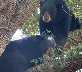 Mommy bear checked out STEM curriculum for her cub