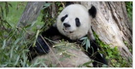 Smithsonian Zoo Animal Cameras