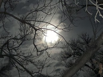 Full Moon Branches by Mr Stucki
