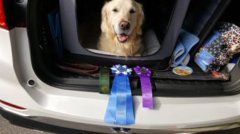 Doggie Accomplishments